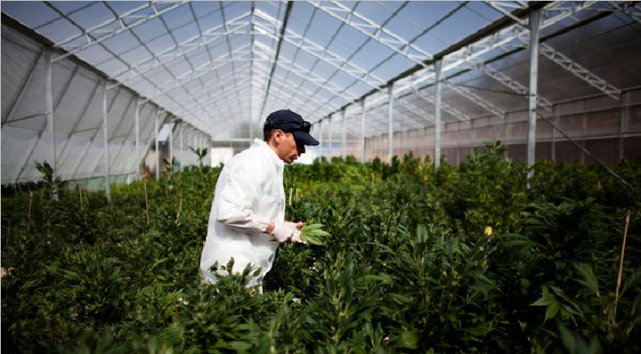новые рабочие места в Канаде