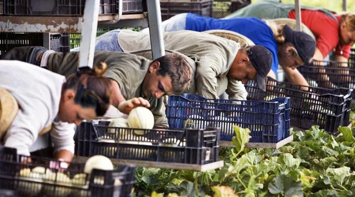 сезонные рабочие в Польше
