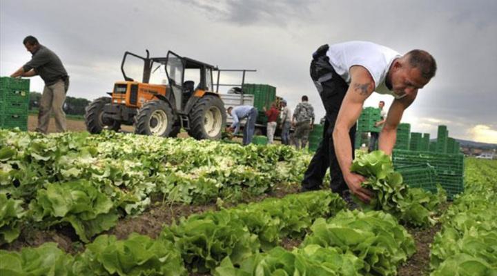 фермеры Германии испытывают дефицит работников