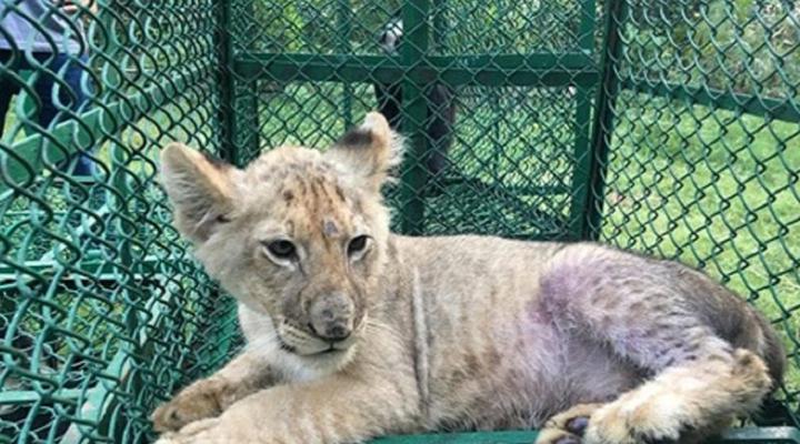 конфіскація незаконно виловлених диких тварин