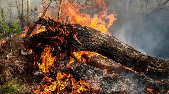 лісові пожежі охопили Сибір