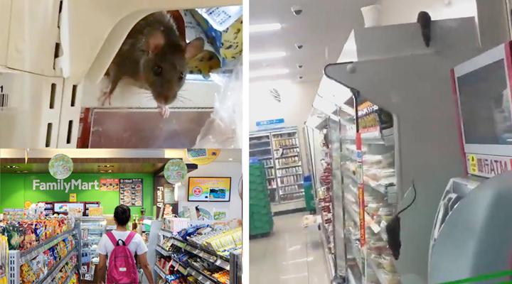 крысы бегают по супермаркету FamilyMart
