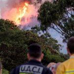 Пожар на Гран-Канарии уничтожил более 10 тысяч га лесов и лугов