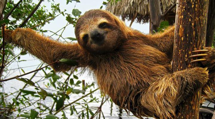 Коста-Ріка має багатющу флору і фауну
