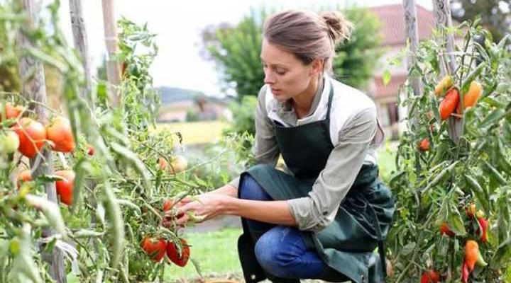 дефіцит робочої сили в сільському господарстві Великобританії