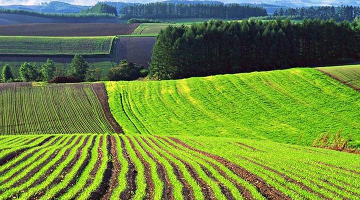в Болгарии будет принят закон о продаже земли иностранцам