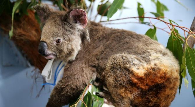 Через годы станет ясно, сколько видов растений и животных полностью исчезнут в Австралии