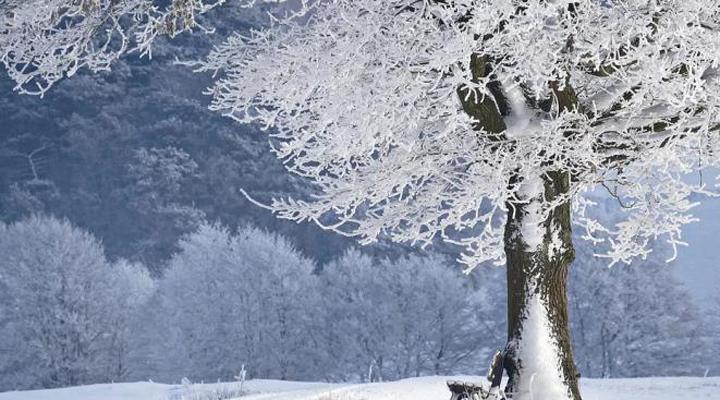 отсутствие снега также может стать причиной плохого урожая некоторых культур