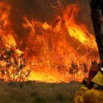 В Австралії збільшилася кількість жертв грандіозних лісових пожеж