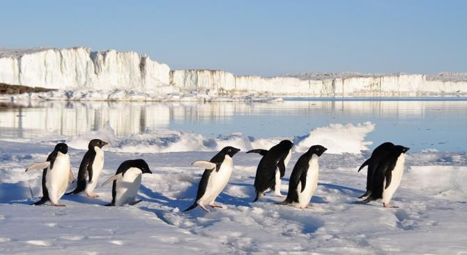 Число пингвинов в некоторых частях Антарктиды резко сократилось