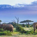 Втрата дикої природи - серйозний удар по економіці усього світу
