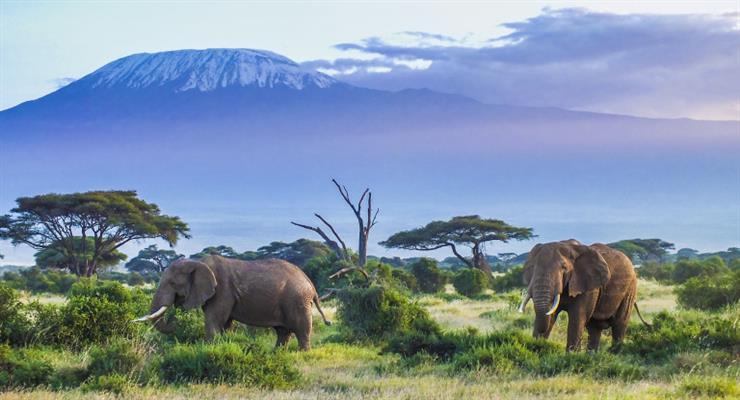 Потеря дикой природы - серьезный экономический удар по миру