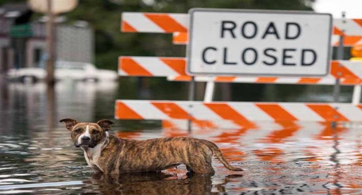 Наводнение в штате Миссисипи, объявлено чрезвычайное положение