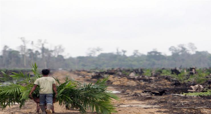 Изменение климата - огромная угроза флоре и фауне планеты