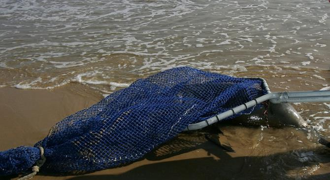 На западное побережье Франции выбросило рекордное количество мертвых дельфинов