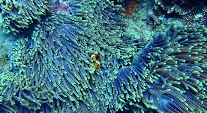 Коралловые рифы по всему миру могут исчезнуть к 2100 году