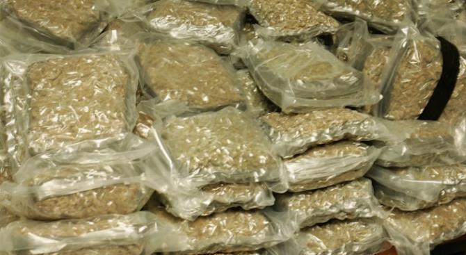 Сербская полиция изъяла 750 кг марихуаны на границе с Румынией