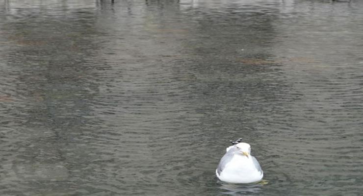 "Река Сена затопила набережные возле Лувра и музея ""Орсе"""