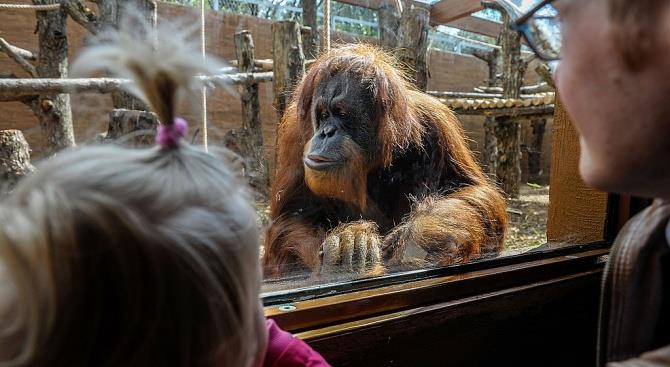 Итальянский зоопарк встревожен новым коронавирусом