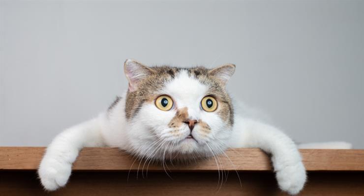 випадок зараження кішки