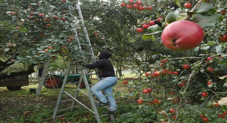 британские фермеры начали кампанию «Накорми нацию»