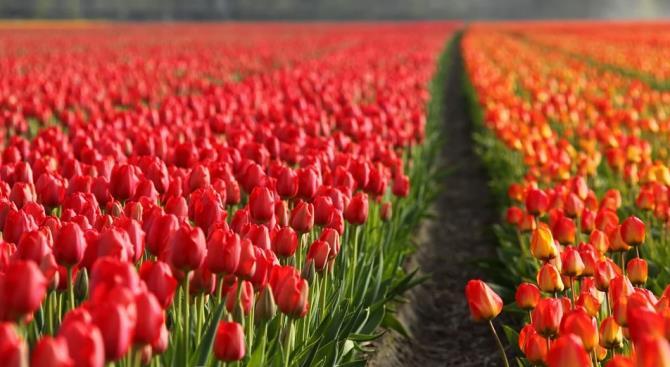 уничтожено 400 миллионов цветов