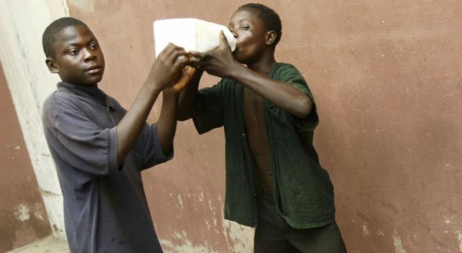 в Танзании используют полынь против COVID-19