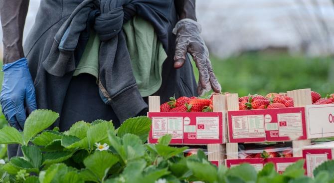 Италия легализовала временных работников