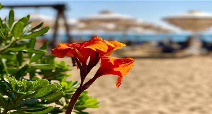 в эти выходные Греция откроет 515 пляжей