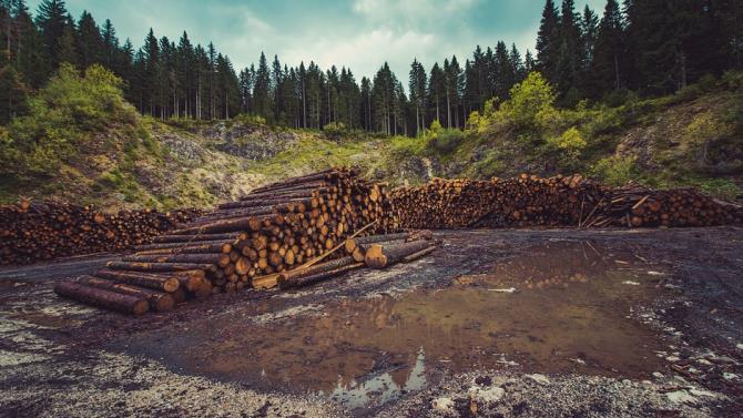 під час пандемії збільшилася безконтрольна вирубка лісів