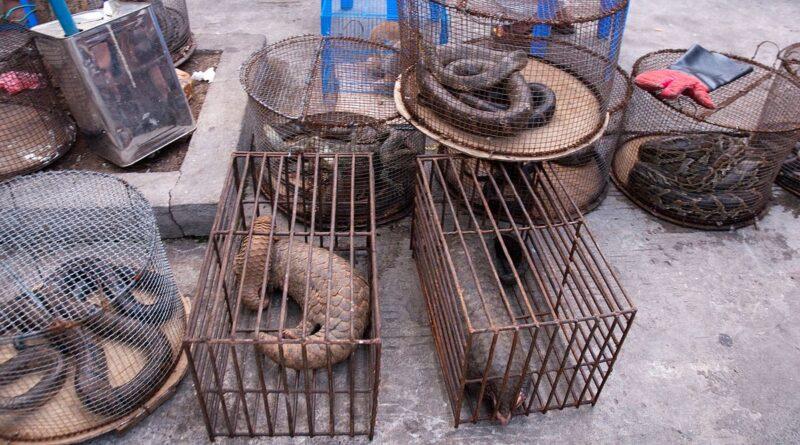 в Китае будут выкупаться у фермеров дикие животные