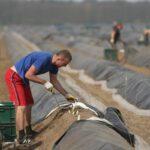 ЕК призывает к защите сезонных работников