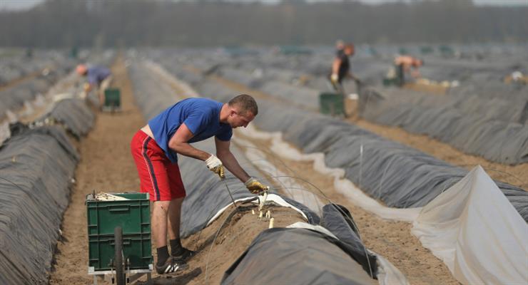 Европейская комиссия призывает к действиям по защите сезонных работников в ЕС