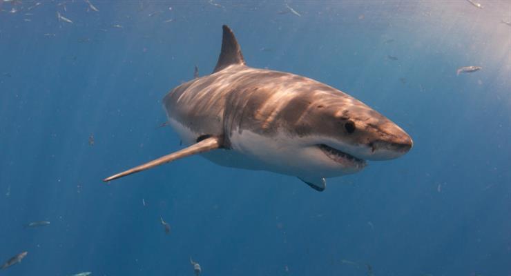 акула вихопила хлопчика з човна
