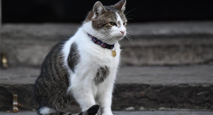 у кішок і собак виявлені антитіла коронавіруса