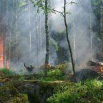 Португалия настороже из-за опасности лесных пожаров