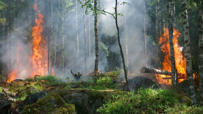 Португалія стурбована можливістю виникнення лісових пожеж