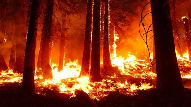 пожежі в найстарішому державному природному парку Каліфорнії
