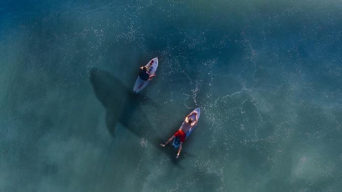 на серфера напала акула