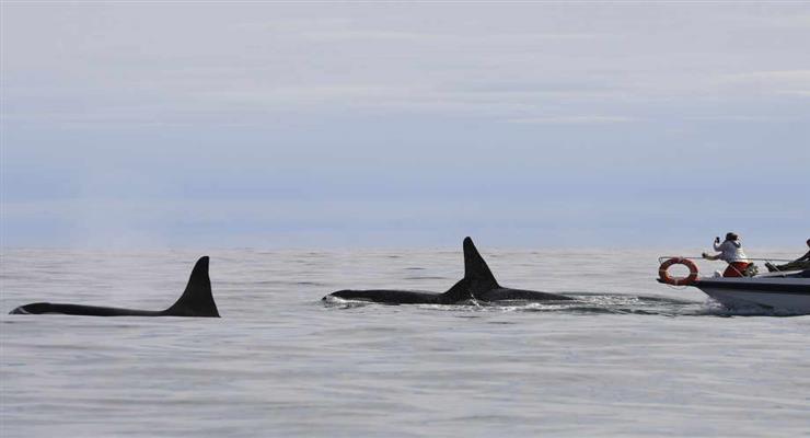 кити потрапили на мілину
