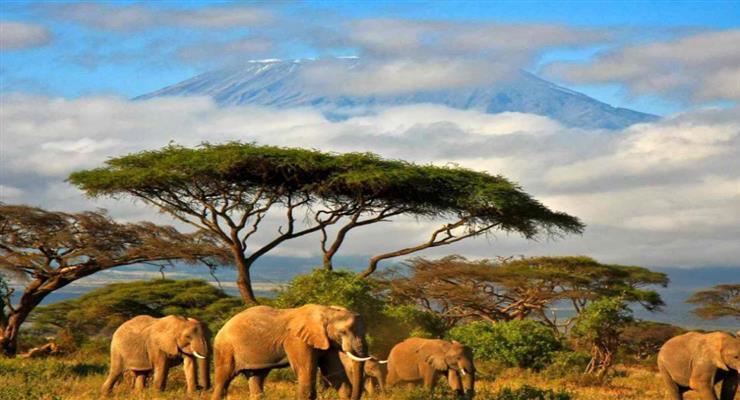 пожежа на Кіліманджаро