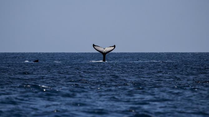 врятовано 120 китів