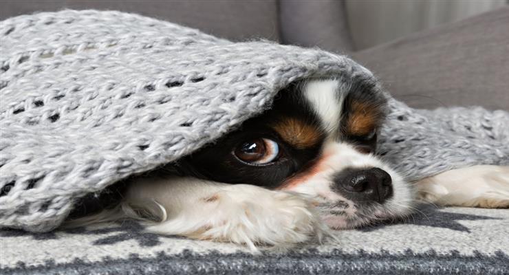 волонтеры помогает владельцам собак и кошек, которые находятся в больнице