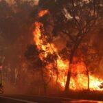 Східна Австралія охоплена пожежами