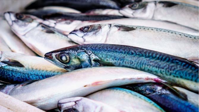 криза рибальської галузі