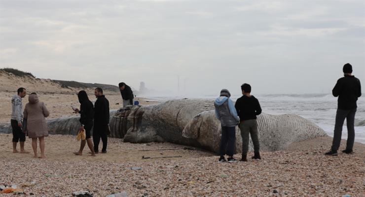 забруднення пляжів в Ізраїлі