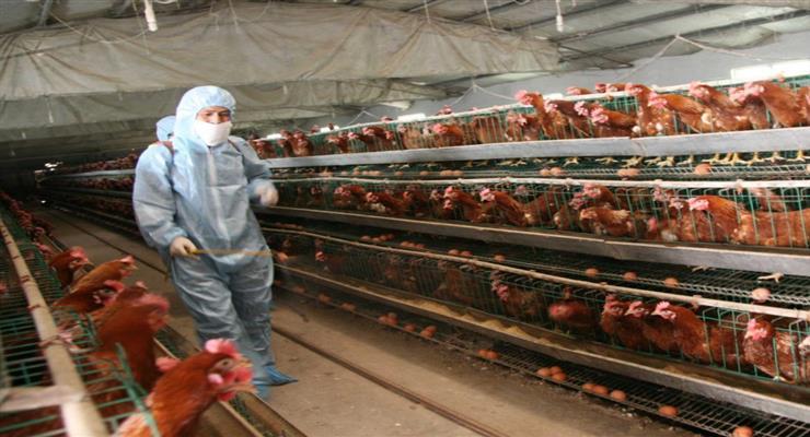 пташиний грип підняв ціни на яйця в Польщі