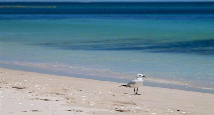 додаток для вибору пляжів