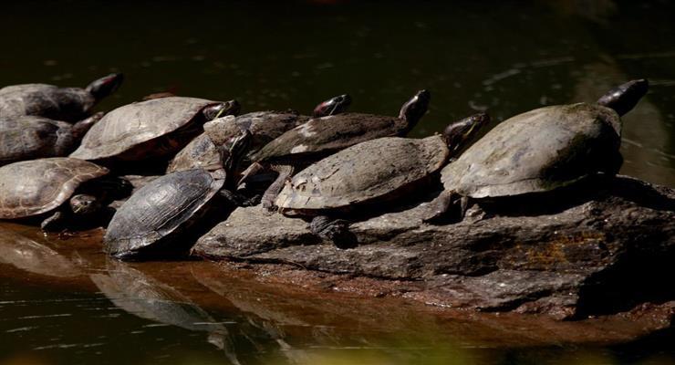 знайдено валізу з черепахами