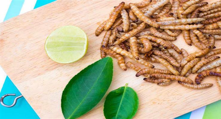 борошняний черв'як стане продуктом харчування